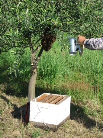 collecting the first bees, Nov 05