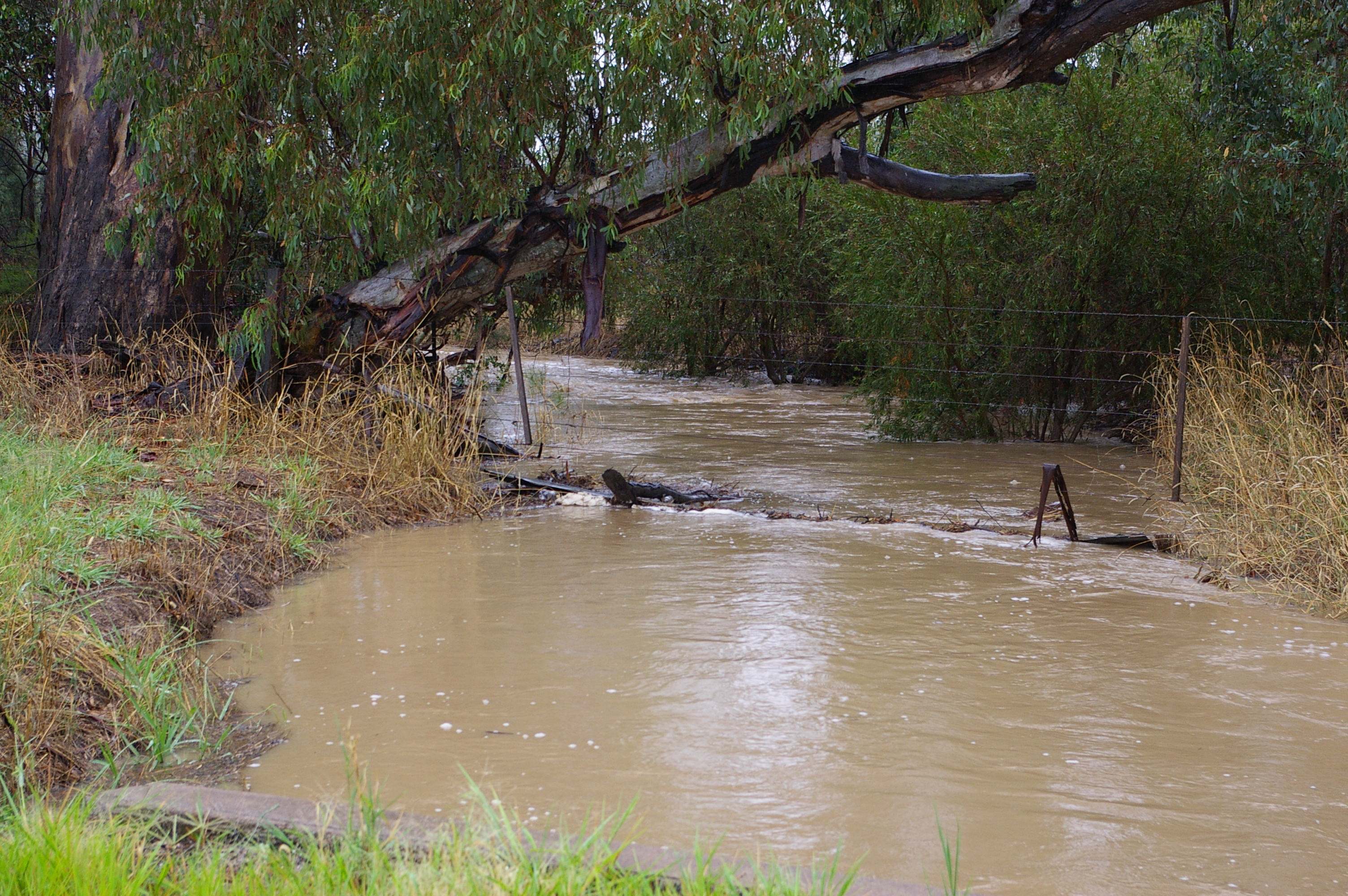 Long Gully Creek in flood, Mar 2012, flowing through fence into Murrnong. At this level the water flows out from the creek onto the floodplain.
