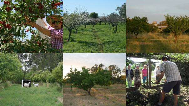 Mixed species orchard