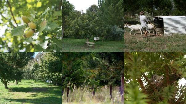 Tree crops