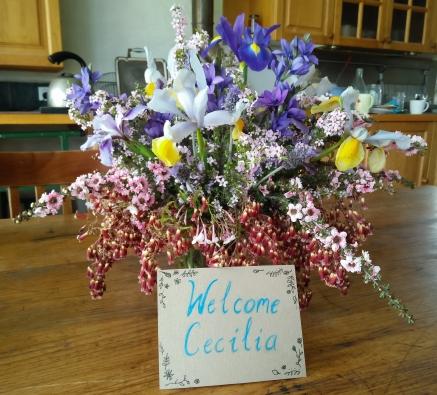 welcome Cecilia.jpg